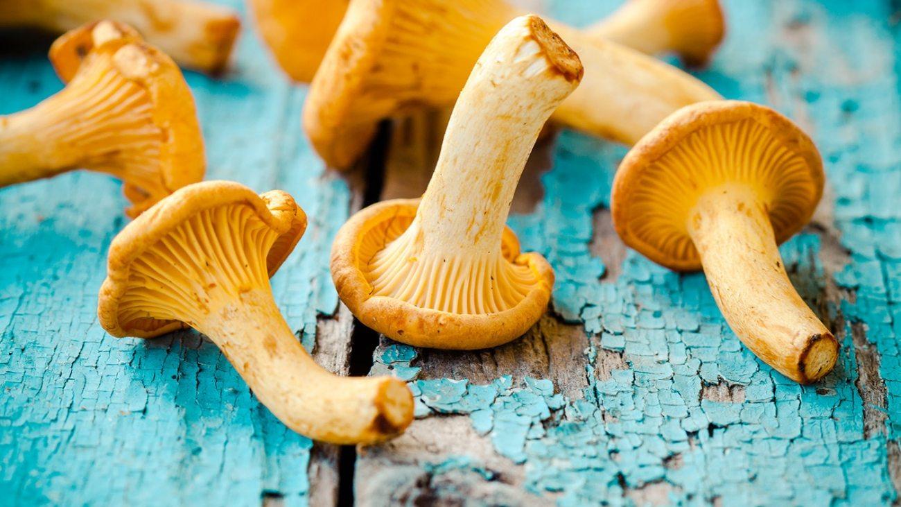 fresh-chanterelle-mushrooms-on-a-wooden-P5YD4CZ
