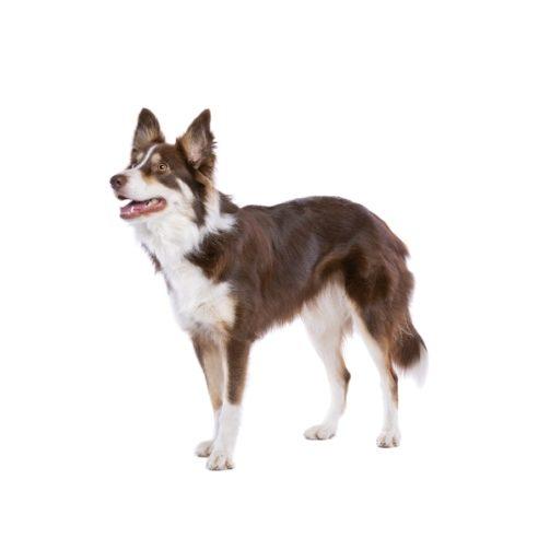dog-6SEQH8Z