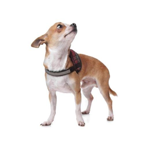 dog-PJLDZT4