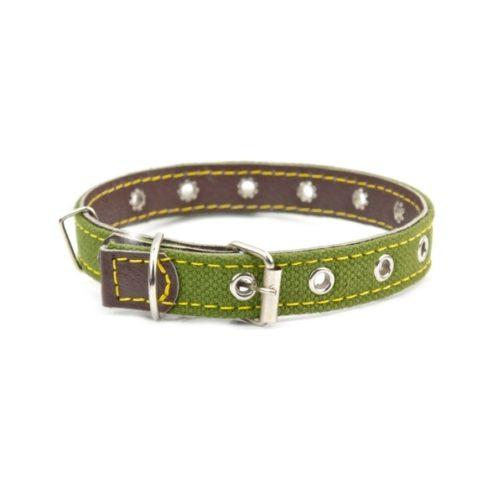 dog-collar-P92XPL5