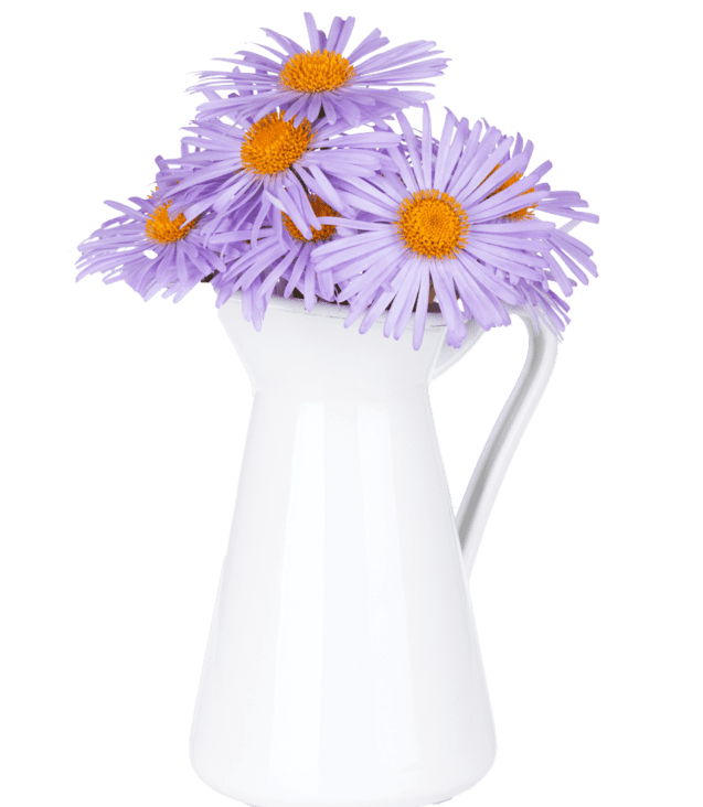 blue-camomile-flowers-in-jug-P6Z6KCB