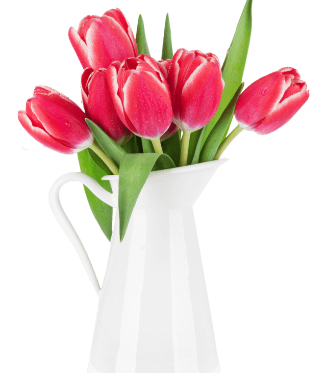 red-tulip-flowers-bouquet-P85CFN2
